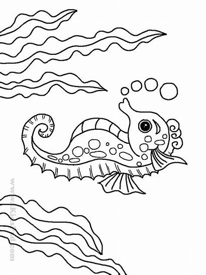 Coloring Pages Animal Under Sea Ocean Printable
