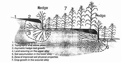 Hedgerow Diagram Barrier Schematic Various Showing Technology