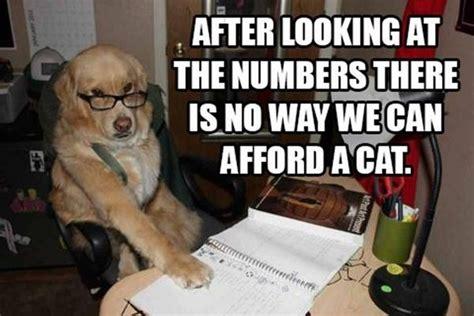 Accountant Dog Meme - best of financial dog meme 15 pics