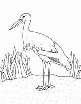 Stork Coloring Pages Printable Museprintables Getdrawings Getcolorings sketch template