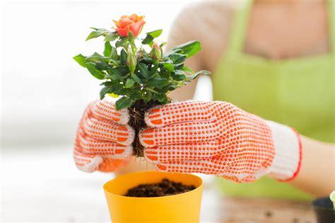 le 231 on de jardin comment planter ses rosiers les conseils pour votre jardin de willemse