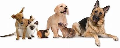 Animals Animal Veterinary Pets Hospital Veterinarian Cruelty