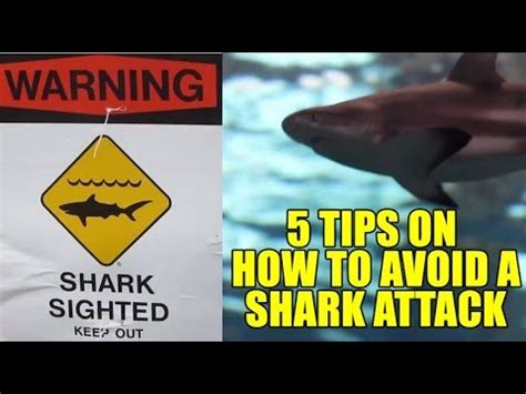 to avoid the s shark attack how to avoid getting attacked by a shark How