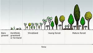 Stages Of Forest Succession  U2013 Forest Succession And