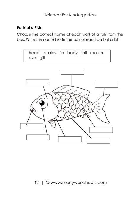 parts  animals body worksheet fish