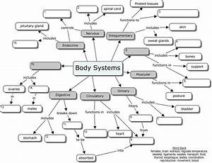 Anatomical Orientaion Sites For Human Anatomy  U0026 Physiology