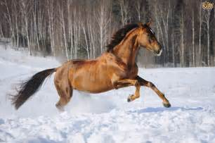 Taking Care Horses