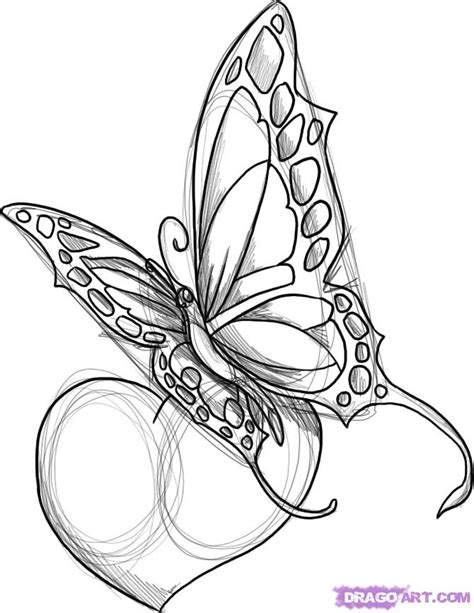 draw  butterfly tattoo step  step butterflies animals   drawing tutorial
