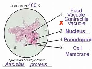 UNIT 6 Protists Focus on: Phyla of Protists - ppt video ...
