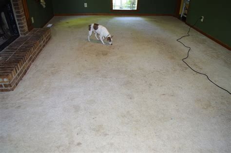 how to clean wood laminate floors if a dog peed on it