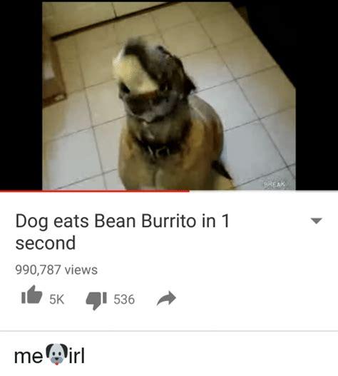 dog eats bean burrito     views
