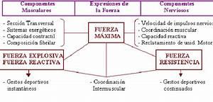 Kombinationen Berechnen Online : fuerza resistencia definicion wikipedia ~ Themetempest.com Abrechnung