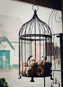 Mini, Pumpkin, Display, Halloween, With, Images