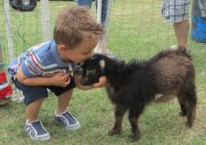 Petting Zoo Goats