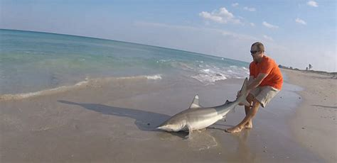 dramatic video shows man rescue  shark   fishing
