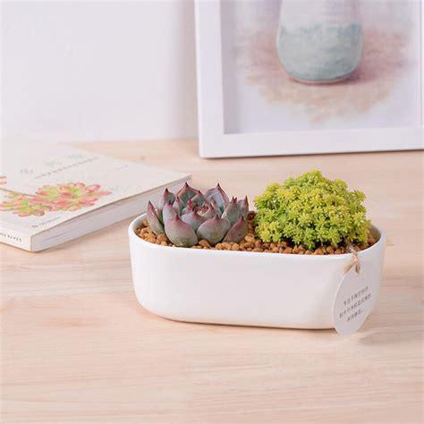 vasi bonsai economici acquista all ingrosso vasi bonsai per la vendita da