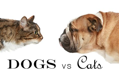 Stories On Stage Dogs Vs Cats  Su Teatro Cultural And