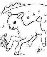 Coloring Lamb Popular Sheep Printable sketch template
