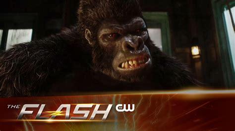 Gorilla Resumen by Gorilla Grodd Aparece En Promo De The Flash Voxpopulix