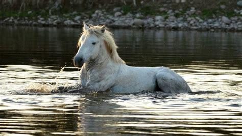 horses wild america