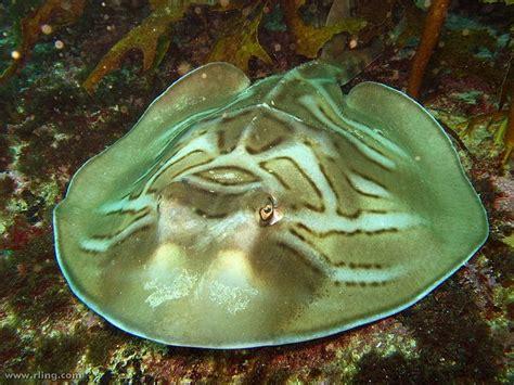 Unusual Marine Animals Bizarre And Unique Marine Animals