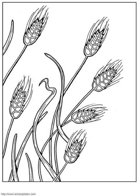 dibujo  colorear trigo dibujos  imprimir gratis