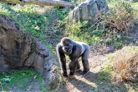 zoos usa animal zoo passport kingdom theme disney park eden passporttoeden