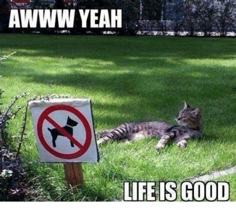 Life Is Good Meme - awww yeah life is good meme on sizzle