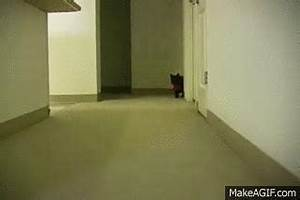 Cat Tail Lol GIF - Find & Share on GIPHY