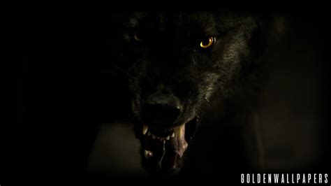Angry Wolf Wallpaper Black by Black Wolf Wallpaper Sf Wallpaper