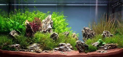 Planted Aquarium Aquascaping by Jan Simon Knispel And Aquascaping Aqua Rebell
