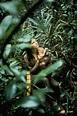 Biruté Mary Galdikas: 'If Orangutans Go Extinct, It Will ...