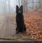 Black wolf dog  wtf is...