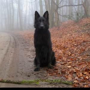 Black wolf/dog | BABIES | Pinterest