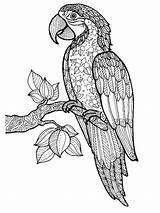 Coloring Parrot Adult Zentangle Adults Mandala Printable Parrots Tekeningen Mycoloring Easy Desenhos Bezoeken Afkomstig Uploaded sketch template
