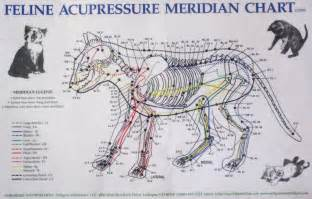 Acupuncture Pressure Points Cats