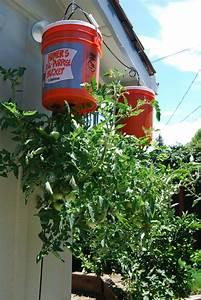 Hängende Pflanzen Für Draußen : h ngende tomaten pflanzen ideal f r den balkon ~ Sanjose-hotels-ca.com Haus und Dekorationen