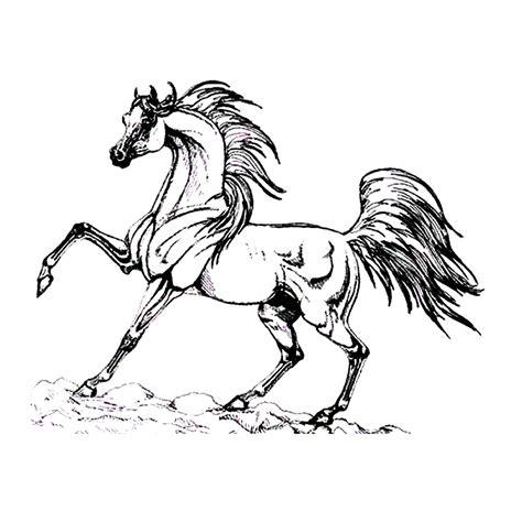 Mooie paard om te versieren. Leuk voor kids - paarden-0027
