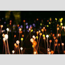 Bruce Munro Light In The Garden  Architectural Lighting