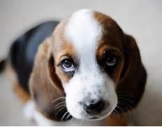 Sad Cute Puppy Eyes Sa...Sad Puppy