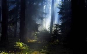 Forest, Dark, Wallpaper