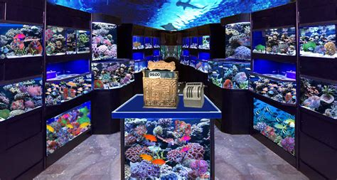 starting a tropical fish store advanced