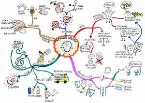 Biology 2 - Human Biology - Judy Jones Biology