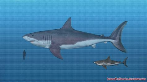 Leedsichthys Compared To Whale Shark And Human