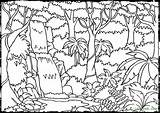 Rainforest Coloring Forest Pages Animal Printable Tree Nature Enchanted Adult sketch template