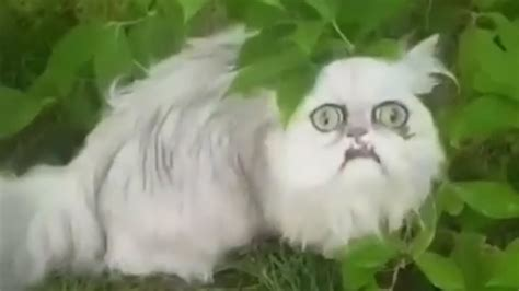 Weird-looking cat Wilfred IS BACK! - YouTube