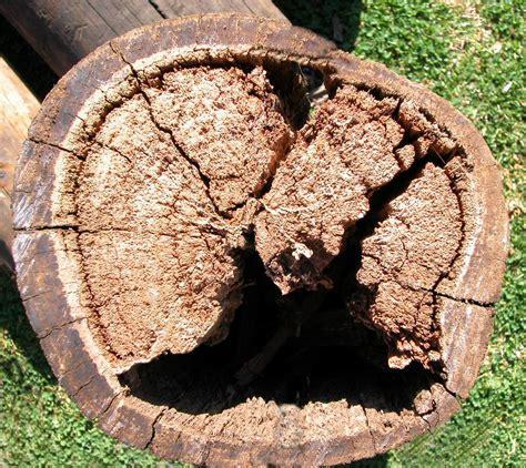 timber properties  decay part ii preschem