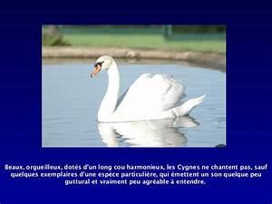 Le Lac Des Cygnes Rennes : le lac des cygnes 1 ~ Dailycaller-alerts.com Idées de Décoration
