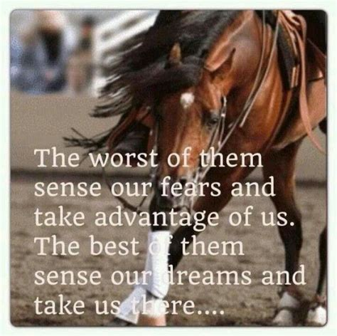 horse sayings quotes horses reining well hurt never quotesgram quote they cowgirl equestrian relationship underestimate yes