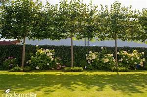 Bambus Braune Blätter : 25 b sta id erna om schnellwachsende hecken p pinterest sichtschutz pflanzen zum gr nen ~ Frokenaadalensverden.com Haus und Dekorationen
